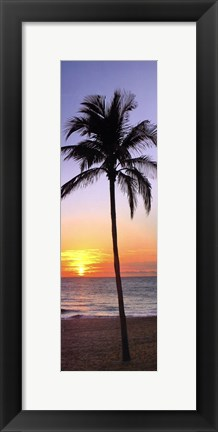 Framed Single Palm I Print
