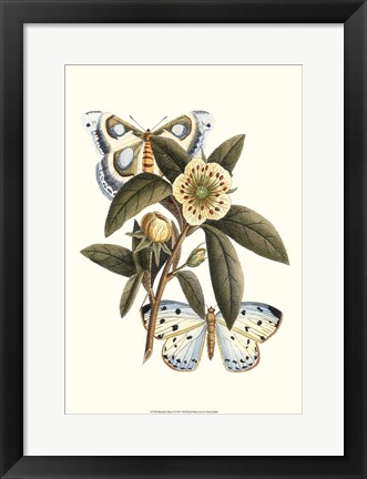 Framed Butterfly Oasis I Print
