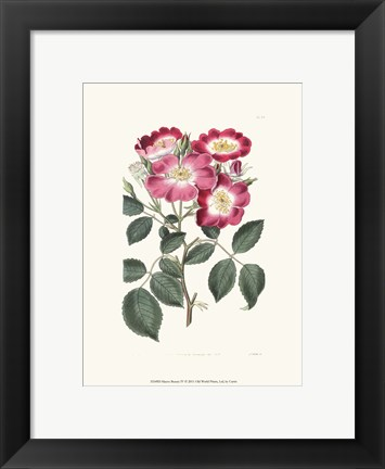 Framed Mauve Beauty IV Print