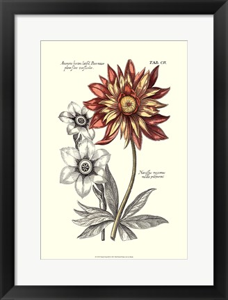 Framed Tinted Floral III Print