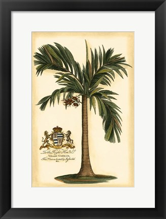 Framed British Colonial Palm I Print