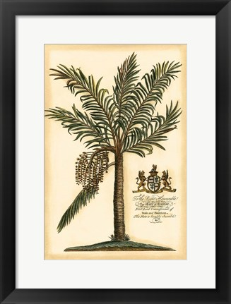 Framed British Colonial Palm II Print