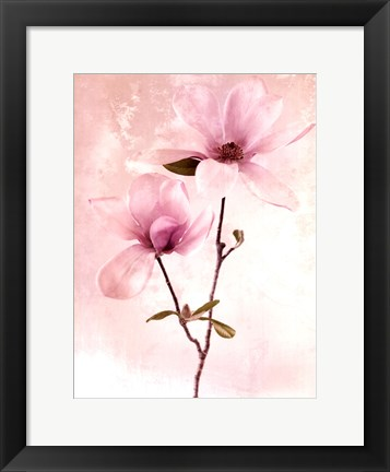 Framed Tulip Blush II Print