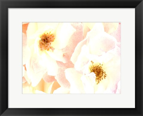 Framed Rose Blush Print