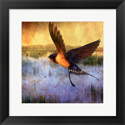 Framed Barnswallow Print