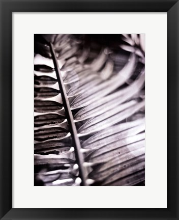 Framed Silvery Frond I Print