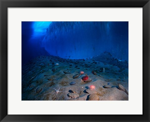 Framed Ice Wall and the Ocean Floor at Explorer's Cover Print