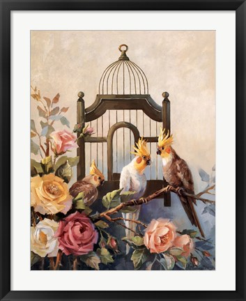Framed Cockatiel and Roses Print