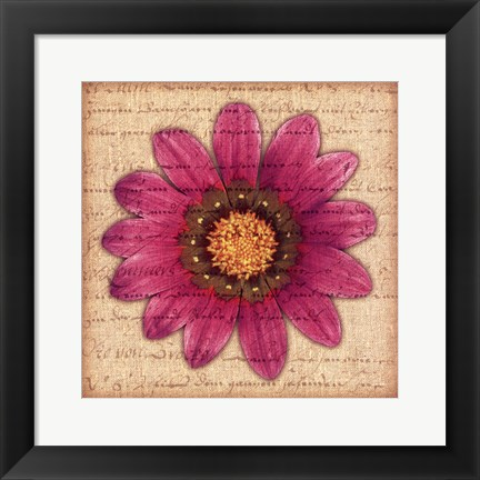 Framed Purple Gazania Print