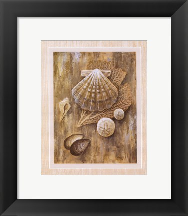 Framed Assorted Shells Print