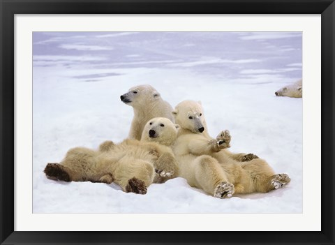 Framed Polar Bear Playtime Print