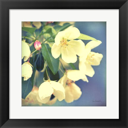 Framed Natures Apple Blossom Print