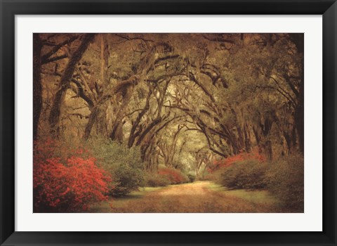 Framed Road Lined With Oaks & Flowers Print