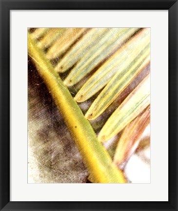 Framed Frond Study II Print