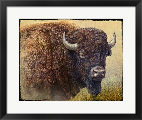 Framed Bison Portrait I Print
