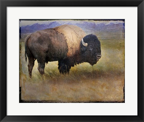 Framed Bison Portrait II Print