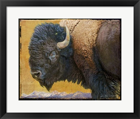 Framed Bison Portrait III Print
