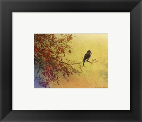 Framed Snow Oak Junco Print