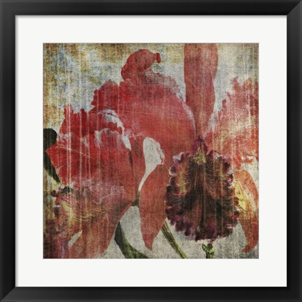 Framed Pacific Orchid I Print