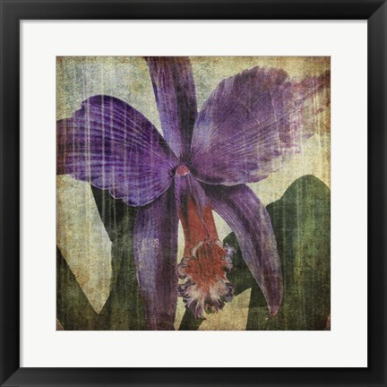 Framed Pacific Orchid II Print