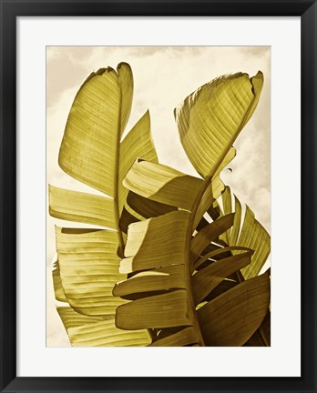 Framed Palm Fronds III Print