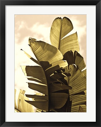 Framed Palm Fronds IV Print