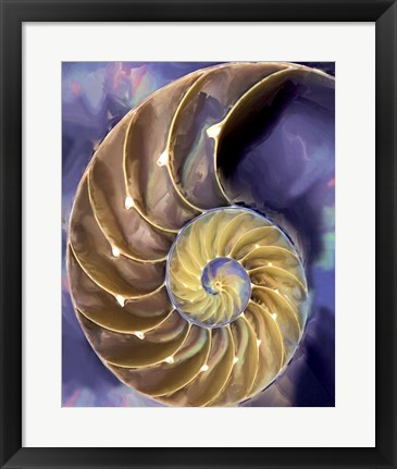 Framed Shell Extraction II Print