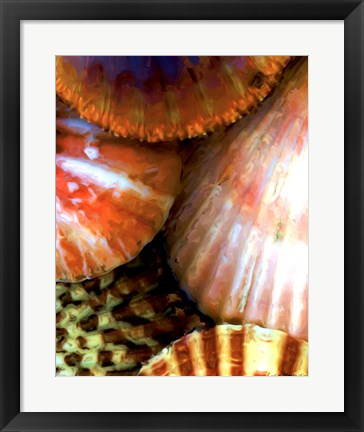 Framed Shell Extraction III Print