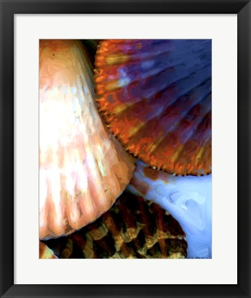 Framed Shell Extraction IV Print