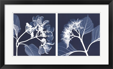 Framed Hydrangeas [Negative] Print