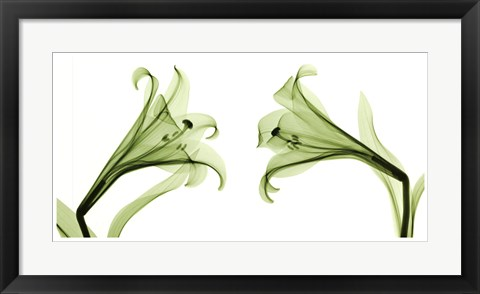 Framed Lilies [Positive] Print
