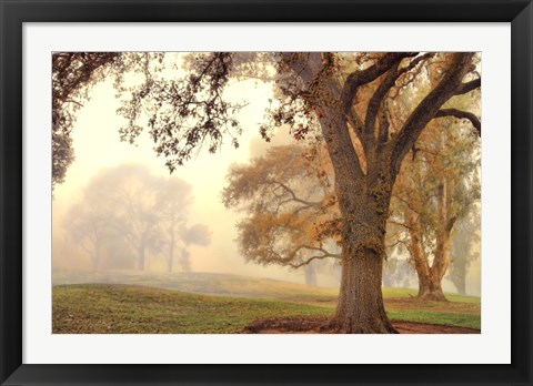 Framed Oak Grove Print