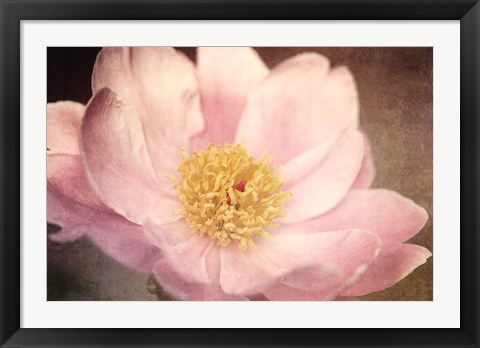 Framed Peony in the Park Print
