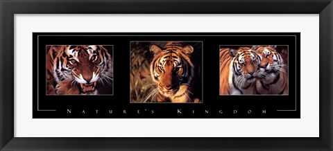 Framed Nature's Kingdom-Tigers Print