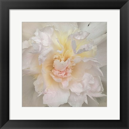 Framed Paeonia Print