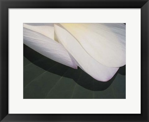 Framed Lotus Detail II Print