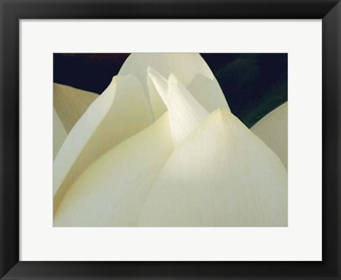 Framed Lotus Detail III Print