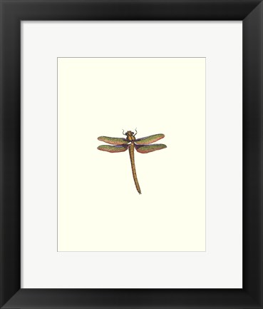 Framed Miniature Dragonfly I Print