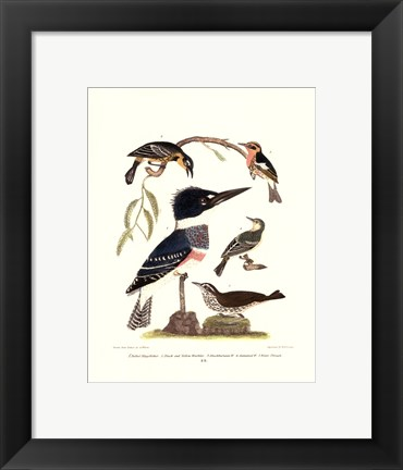 Framed Small Antique Kingfisher I Print