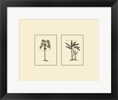 Framed Miniature Palm I Print
