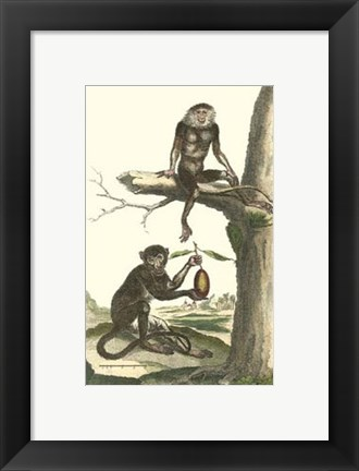 Framed Macaque and Douc Monkeys Print