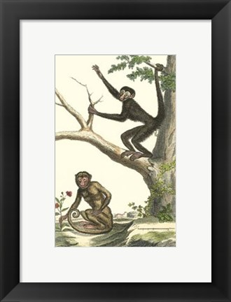 Framed Coaita and Sajou Monkeys Print