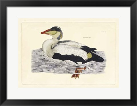 Framed Duck III Print
