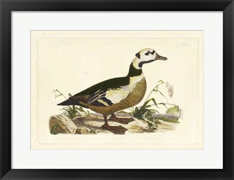 Framed Duck VI Print