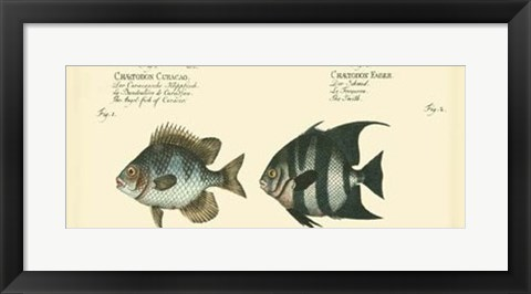 Framed Antique Fish II Print
