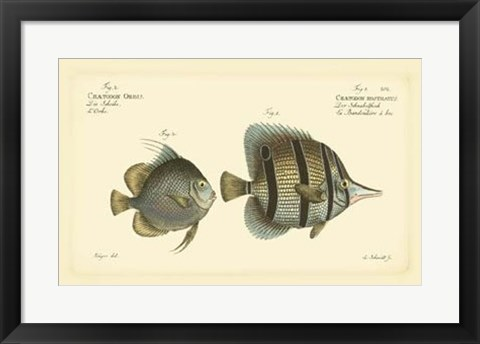 Framed Antique Fish III Print