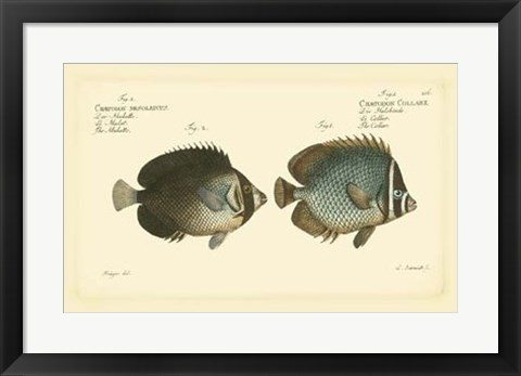 Framed Antique Fish V Print