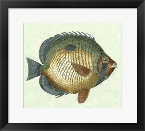 Framed Butterfly Fish I Print