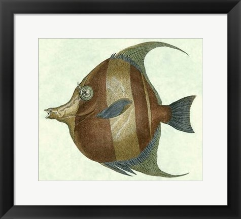 Framed Angel Fish II Print