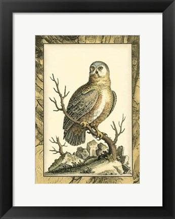 Framed Majestic Perch I Print